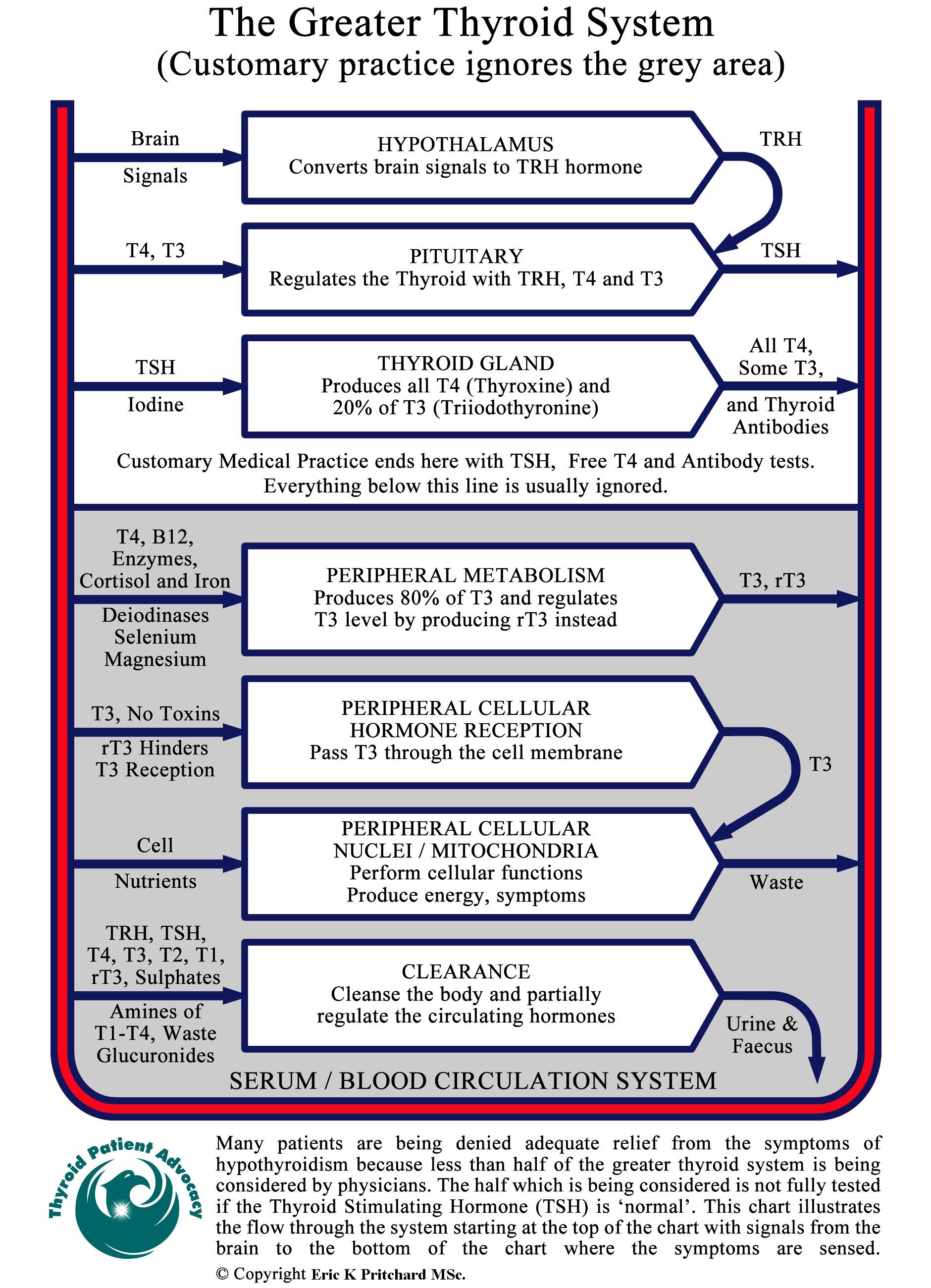 understanding thyroid disease essay Understanding thyroid disease essay by 12/11/2017 22 0 0 dissertation titles in rguhs use are essay titles underlined when written worksheet answers.